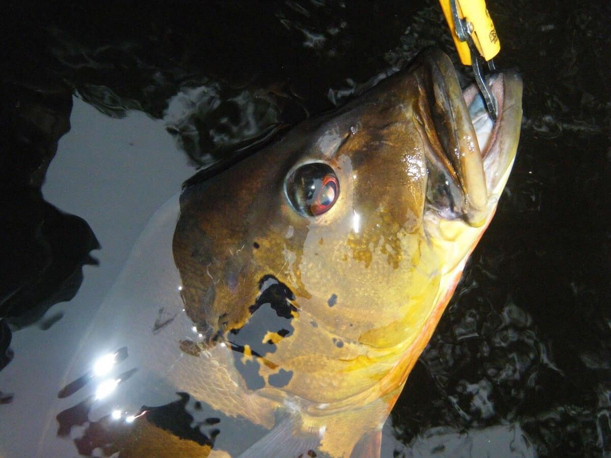 Pacote para Pescaria de Tucunaré na Amazônia