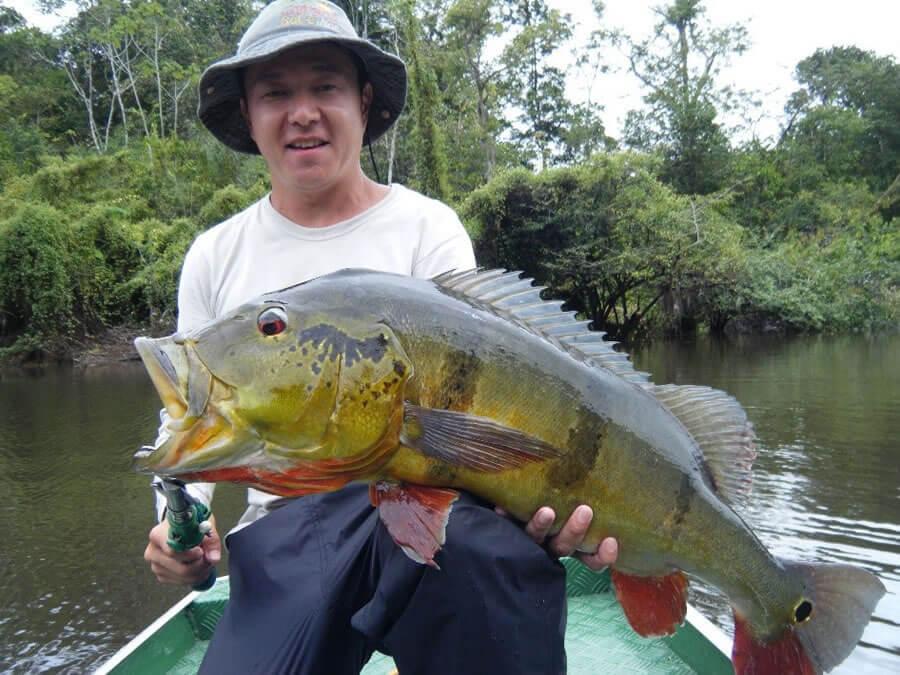 Pescaria de Tucunaré-Açu na Amazônia