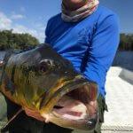 Pacote de Pesca de Tucunarés na Amazônia