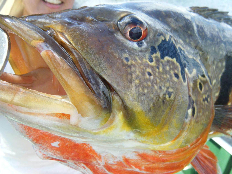 Pro Tucuna - Pescaria de Tucunaré Açu na Amazônia