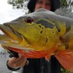 Pacote de Pesca Esportiva de Tucunarés na Amazônia