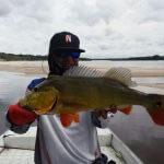 Pescaria Esportiva de Tucunaré no Rio Negro e Região