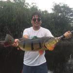 Pescaria Esportiva de Tucunaré no Rio Negro