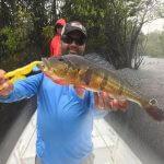 Pescaria Esportiva no Rio Negro e Afluentes